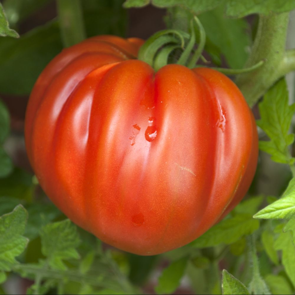 Tomates coeur de boeuf (250g)